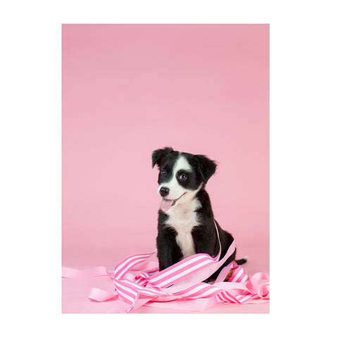 Note Cards- Border Collie