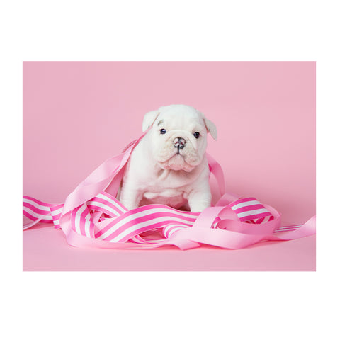 Note Cards- Bulldog