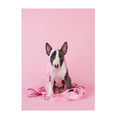 Note Cards- Bull Terrier