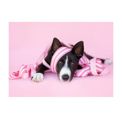 Note Cards- Canaan Dog