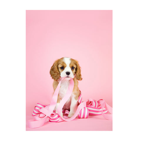 Note Cards- Cavalier King Charles Spaniel