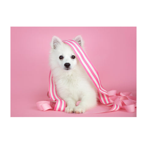 Note Cards- American Eskimo