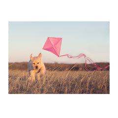 Note Cards- Go Fly a Kite