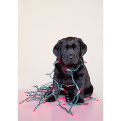 Holiday- Wrapped in Lights Labrador