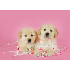 Holiday- Goldens Wrapped in Lights