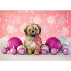 Holiday- Shih Tzu Mix