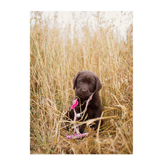 Note Cards- Pink Whistle Hunting Dawg