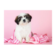 Note Cards- Shih Tzu Mix
