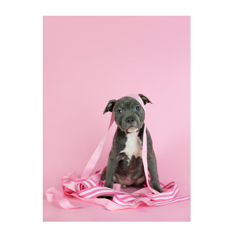 Note Cards- Staffordshire Bull Terrier