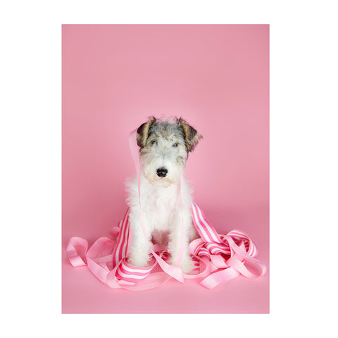 Note Cards- Wire Fox Terrier