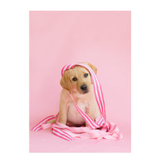Note Cards- Labradors