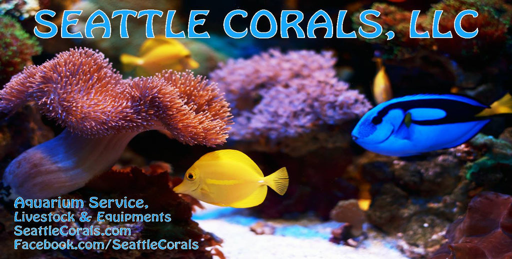 Seattle Corals, LLC