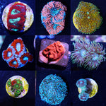LPS and Softies Value Frag Pack - 10 PACK