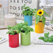 Can + Plant (Strawberry, Basil, Mint or Sunflower)