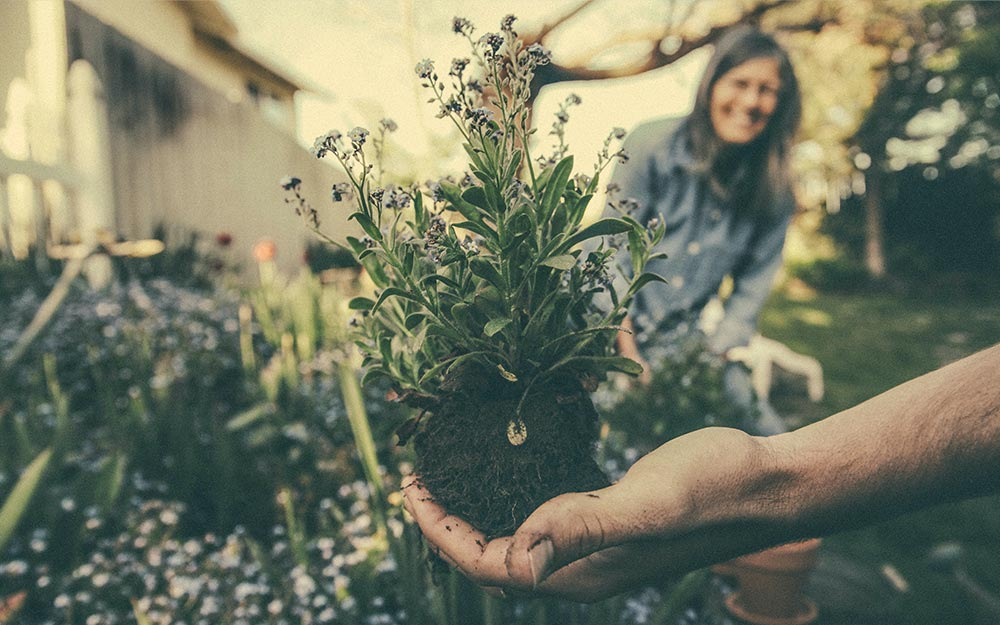 4 exceptional tips for your garden