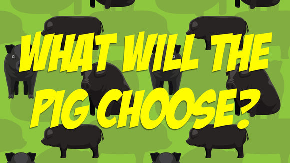 What Will The Pig Choose? Crowd Breaker Video