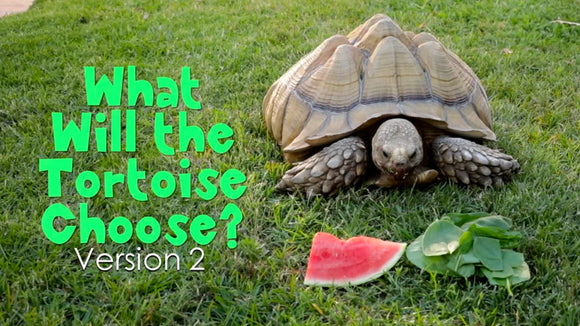 What Will the Tortoise Choose [Version 2] Crowd Breaker Game