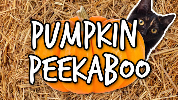Pumpkin Peekaboo On Screen Game