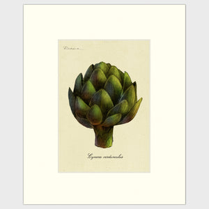 art prints for sale-Realistic rendering of an artichoke.