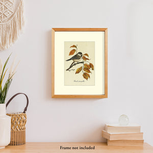 Art prints for sale-Traditional rendering of a black-capped chickadee sitting on a branch blending in with fall color leaves