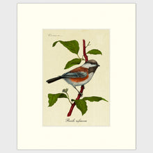Load image into Gallery viewer, Art prints for sale-Traditional rendering of a chestnut-backed chickadee perched on a dogwood branch