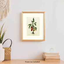 Load image into Gallery viewer, Chili Pepper Plant