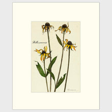 Load image into Gallery viewer, Fine art prints for sale. Realistic rendering of decaying daisies.