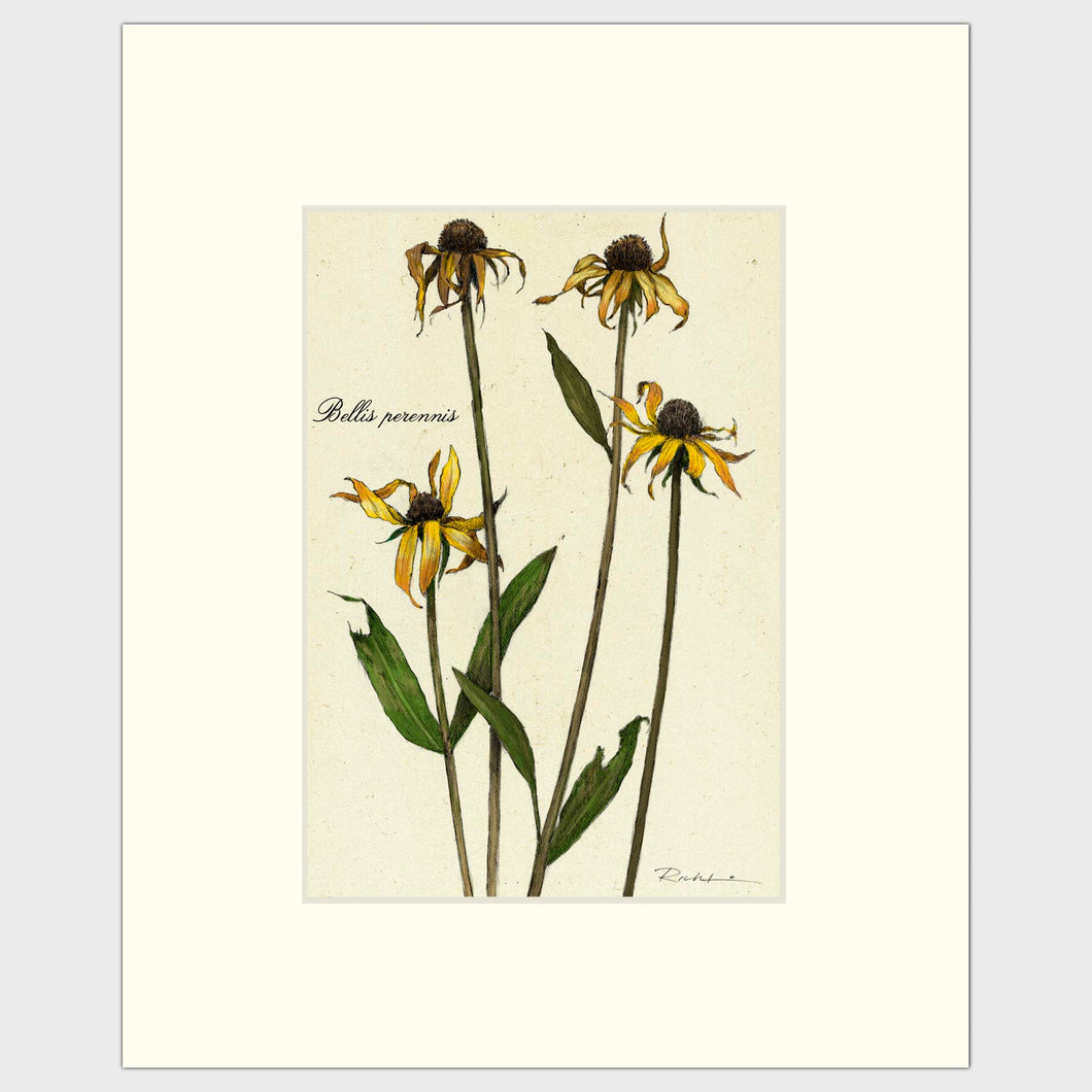 Fine art prints for sale. Realistic rendering of decaying daisies.