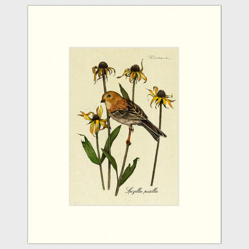Art prints for sale-Traditional rendering of a field sparrow resting on a stem of a flower