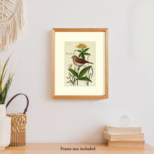Load image into Gallery viewer, Art prints for sale-Traditional rendering of a fox sparrow resting on a small plant