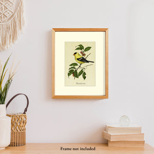 Art prints for sale-Traditional rendering of a golden finch perched on a branch of a crabapple tree