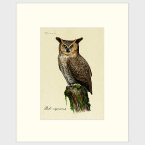 Art prints for sale-Traditional rendering of a great-horned owl standing on an old tree stump