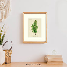 Load image into Gallery viewer, Lady Fern