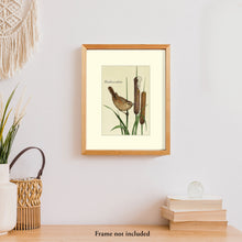Load image into Gallery viewer, Art prints for sale-Traditional rendering of a marsh wren landing on a cattail