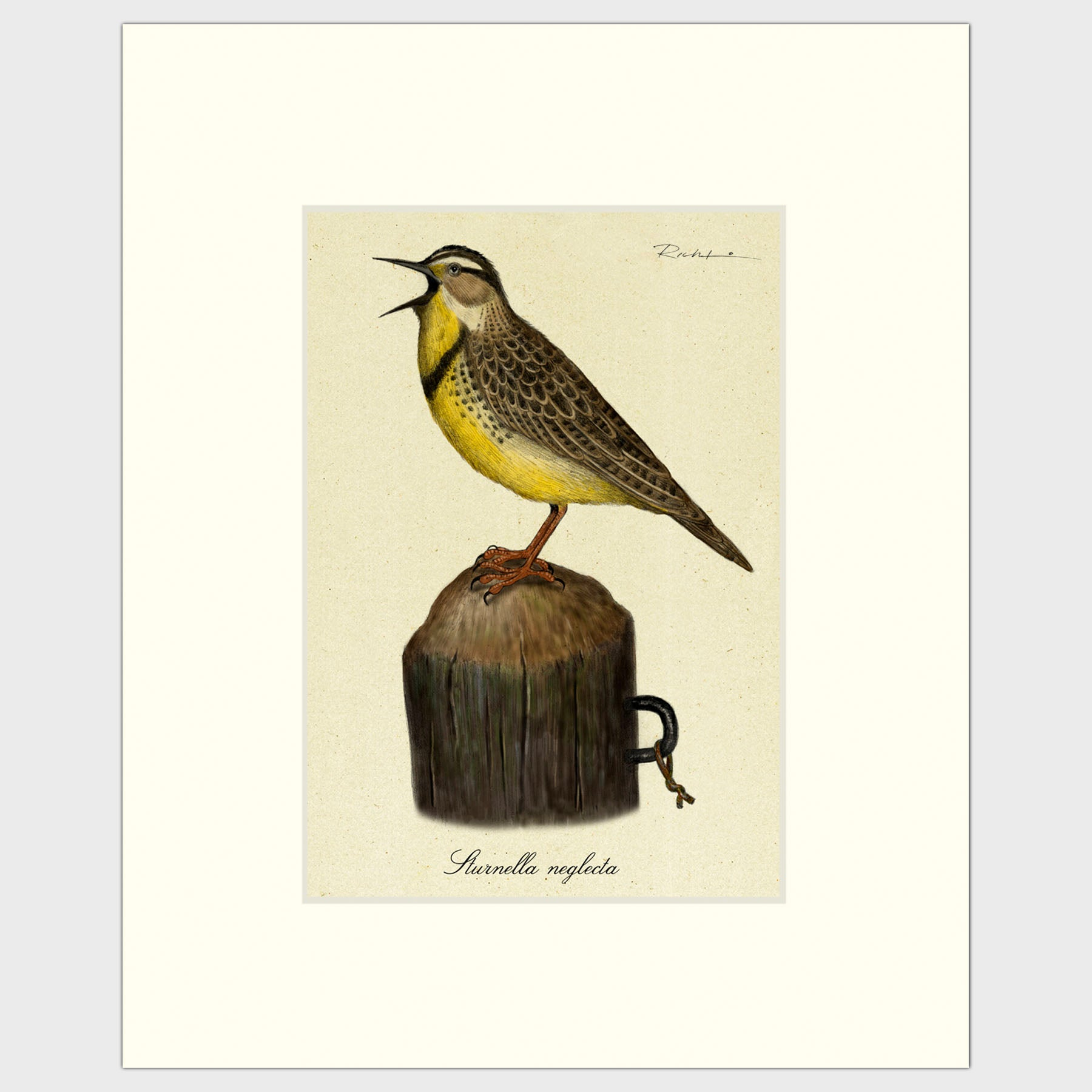 Art prints for sale-Traditional rendering of a calling meadow lark standing on a small post