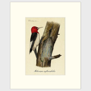 Art prints for sale-Traditional rendering of a red-headed woodpecker on a dead tree looking for food