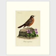 Load image into Gallery viewer, Art prints for sale-Traditional rendering of an American Robin standing alert on a small tree stump