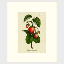 Load image into Gallery viewer, Strawberry Plant