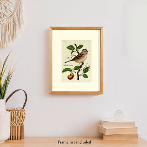 Art prints for sale-Traditional rendering of a tree sparrow resting on a branch of a crabapple tree