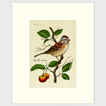 Load image into Gallery viewer, Art prints for sale-Traditional rendering of a tree sparrow resting on a branch of a crabapple tree