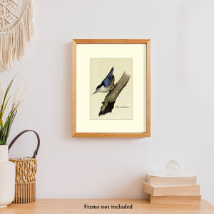Art prints for sale-Traditional rendering of a white-breasted nuthatch looking for food