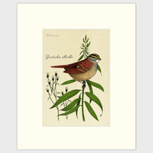 Load image into Gallery viewer, White-Throated Sparrow