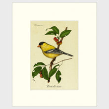 Load image into Gallery viewer, Art prints for sale-Traditional rendering of a yellow finch perched on a branch of a crabapple tree