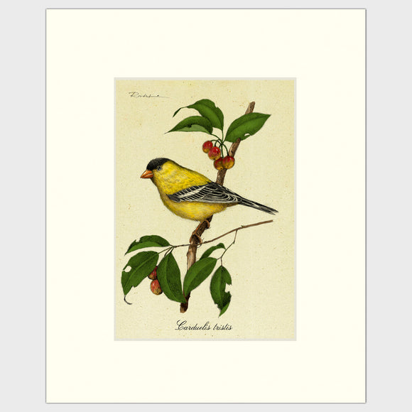 Art prints for sale-Traditional rendering of a yellow finch perched on a branch of a crabapple tree