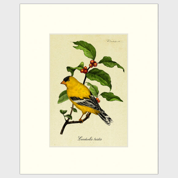 Art prints for sale-Traditional rendering of a yellow finch sitting on a branch of a berry bush