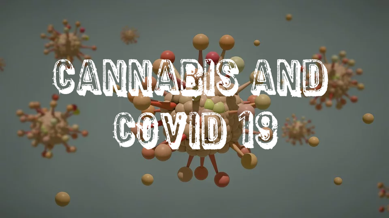 Cannabis and How It May Help to Prevent Acute Respiratory Distress Syndrome (ARDS) - Anamika Mehta, Molecular Genetic Scientist
