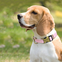 Load image into Gallery viewer, Personalized Nylon Dog Collar