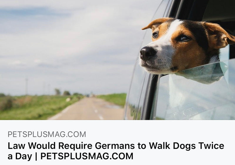 Law Would Require Germans to Walk Dogs Twice a Day