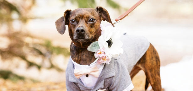 Bow Vows: Dogs in Weddings