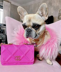 Haute Couture: High Fashion in the Pet Industry